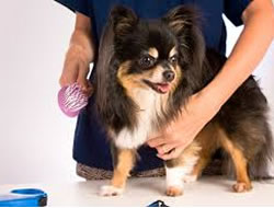 Dog Grooming in Glendale